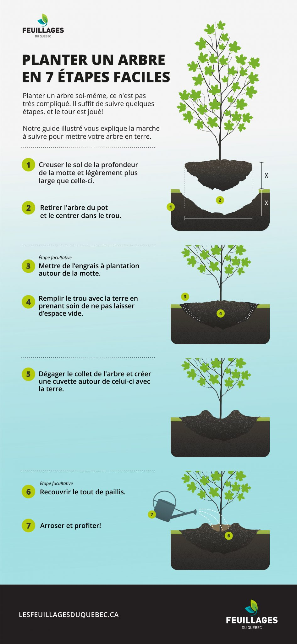 comment planter un arbre en 7 étapes faciles